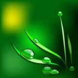 Gotas de rocío en la lámina de la hierba Ilustración del vector Fotografía de archivo