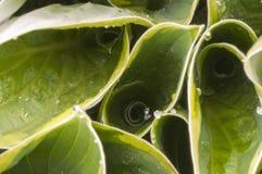 Gotas de rocío en las hojas Fotos de archivo