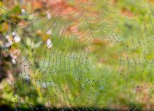 Gotas de rocío en un web del ` s de la araña; fotografiado cerca de Underberg en la cordillera de Drakensberg en Suráfrica Imagen de archivo