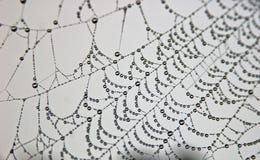 Gotas de rocío en Web Imagen de archivo libre de regalías