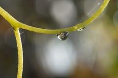 Gotas de suspensão da água Imagens de Stock