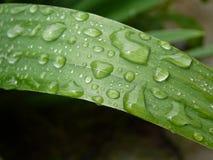 Gotas de uma chuva Fotografia de Stock Royalty Free