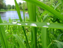 Gotas de uma chuva em uma grama Foto de Stock Royalty Free