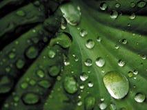 Gotas de una lluvia en las hojas. Fotos de archivo libres de regalías