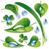 Gotas del agua con hojas