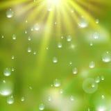 Gotas del agua en fondo verde EPS10 más fotos de archivo