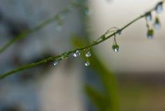 Gotas del agua en hierba verde Fotografía de archivo