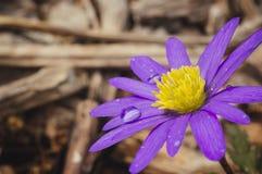Gotas del agua en la flor foto de archivo