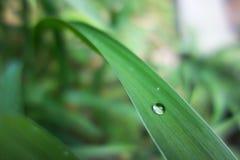 Gotas del agua en la hierba Fotografía de archivo libre de regalías