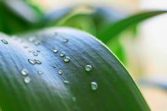 Gotas del agua en la hierba verde foto de archivo