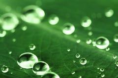 Gotas del agua en la hoja Imagenes de archivo