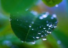 Gotas del agua en la hoja Fotos de archivo libres de regalías