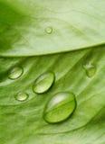 Gotas del agua en la hoja de la planta Foto de archivo