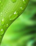 Gotas del agua en la hoja verde Imagen de archivo libre de regalías