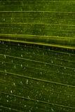 Gotas del agua en la hoja verde Imagen de archivo