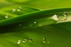 Gotas del agua en la hoja verde Fotografía de archivo libre de regalías