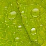 Gotas del agua en la hoja verde Foto de archivo