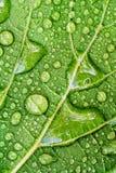 Gotas del agua en la hoja verde Fotografía de archivo