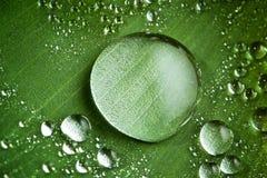Gotas del agua en la hoja verde fresca fotografía de archivo libre de regalías