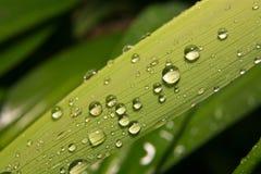 Gotas del agua en la lámina de la hierba Fotos de archivo libres de regalías