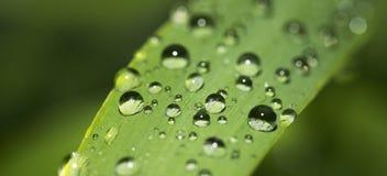 Gotas del agua en la lámina de la hierba fotografía de archivo