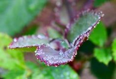 Gotas del agua en la planta Foto de archivo libre de regalías