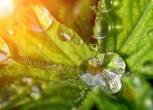 Gotas del agua en la planta Fotos de archivo