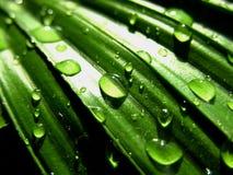 Gotas del agua en la superficie de la hoja Foto de archivo