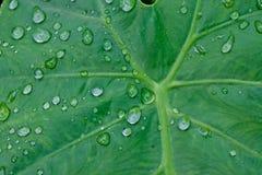 Gotas del agua en las hojas Imágenes de archivo libres de regalías