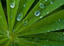 Gotas del agua en las hojas Imagen de archivo