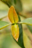 Gotas del agua en las hojas imagenes de archivo