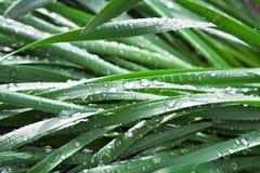 Gotas del agua en las hojas Fotos de archivo libres de regalías