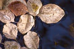 Gotas del agua en las hojas de otoño flotantes Foto de archivo
