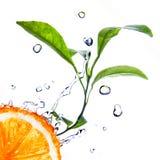 Gotas del agua en naranja con las hojas verdes fotos de archivo libres de regalías