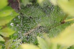 Gotas del agua en un Web Fotografía de archivo libre de regalías