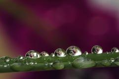Gotas del agua en una hierba fotografía de archivo libre de regalías