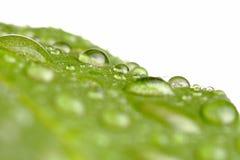 Gotas del agua en una hoja Fotos de archivo