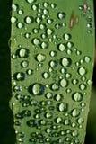 Gotas del agua en una hoja Foto de archivo libre de regalías
