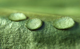 Gotas del agua en una hoja verde imagenes de archivo