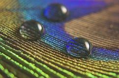 Gotas del agua en una pluma del pavo real Fotos de archivo libres de regalías