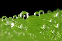 Gotas del agua en verde Imagenes de archivo