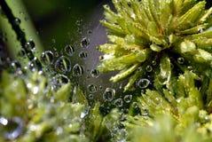 Gotas del agua en Web de araña Imagenes de archivo