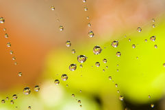 Gotas del agua en Web de araña Imagen de archivo