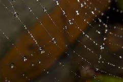 Gotas del agua en Web de araña Foto de archivo libre de regalías