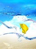 Gotas del woter y del mar con los pescados Fotografía de archivo