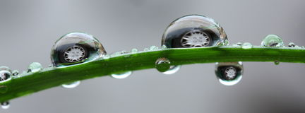 Gotas do fim da água Imagem de Stock Royalty Free