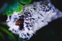 Gotas do orvalho nas folhas de outono Fotografia de Stock