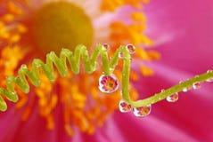 gotas e flor Imagens de Stock