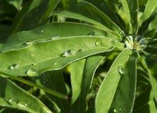 Gotas e orvalho da água em uma folha de palmeira Fotos de Stock Royalty Free