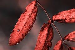 Gotas efervescentes na folha na cor do coral de vida fotos de stock